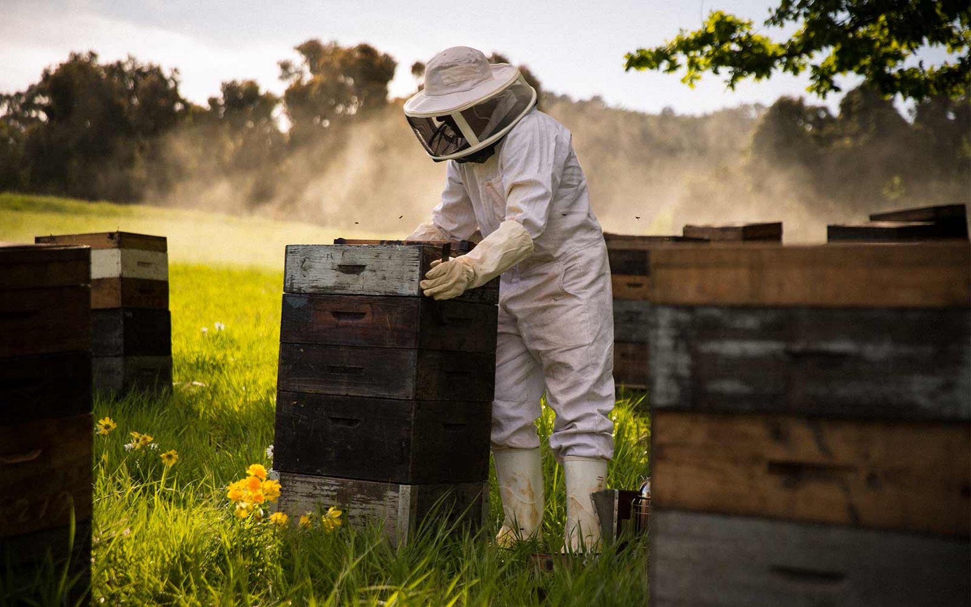 ruche chez soi meilleur top astuces pour avoir une confiance en soi avoir une ruche chez soi. Black Bedroom Furniture Sets. Home Design Ideas
